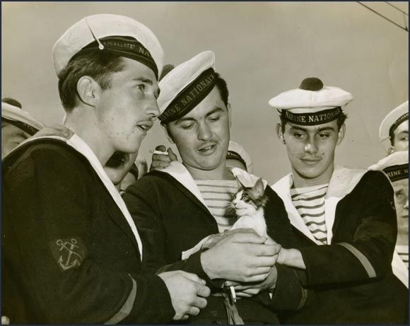 Französische Seeleute mit einem Kätzchen, 1950