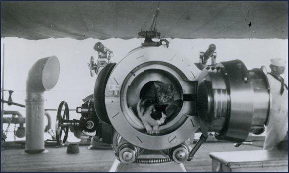 2 Katzen posieren an der Mündung einer Kaliber 4'' Schiffskanone im 1. Weltkrieg