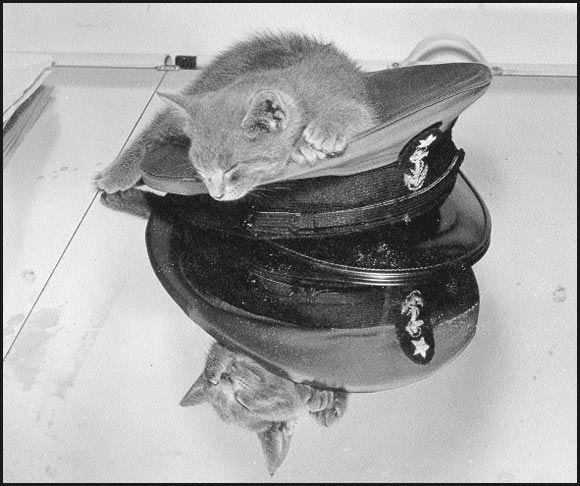 """""""Bilgewater"""", das Maskottchen der Coast Guard Academy, um 1944"""